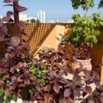בית אבות הדרים רמת גן צמחים בגינה