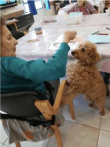 בית אבות הוד השרון טיפול בכלבים